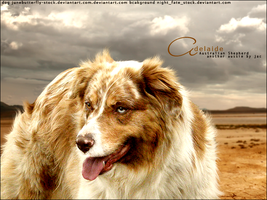 aussie shepherd for HP by Subaru09
