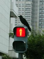 Stop. Crow. by ShiverZPhotography