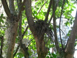 Nesting Habits by AcrylicHeart