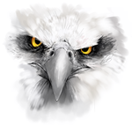 Eagle by xMits