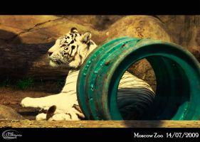 - moscow zoo 16 - by Dc-Creative