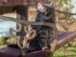 Cat on the bench by 75ronin