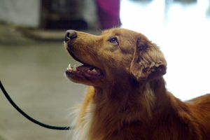 Toller profile by ANIMAxphoto