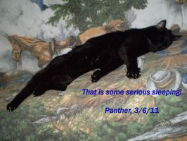 Panther sleeping on my couch by Black-Feather