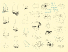 Hampton p.69-71: Nose + Eye Studies by theThirdCartel