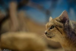 Sand Cat by iGreefing