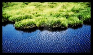 grass and water by XeOdy