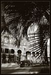Plant Hall behind Tree by tyt2000