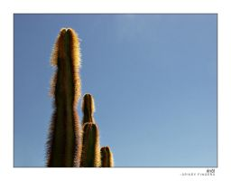 spikey fingers by knold