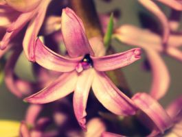 Hyacinth by MartyPunk13