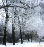 winter in the park by ildiko-neer