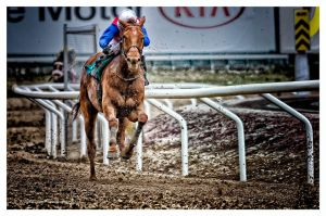 A Day At The Races  -All Or Nothing by AndersStangl