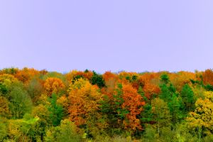 Autumnal Landscape nearby Amiens by pohlmannmark