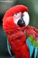 Green-winged Macaw by MadinkaClaireC
