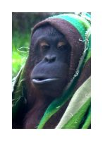 Ma Orang - Portrait by steppeland