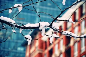 Winter.. by Shai5tKm