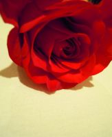 Rose 5 by cedardoo6