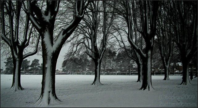 Watcher in Page Park by bopeep2009