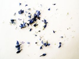 FREE STOCK, Flower Debris by mmp-stock