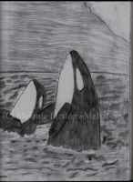 Orcas by Mel-at-ne