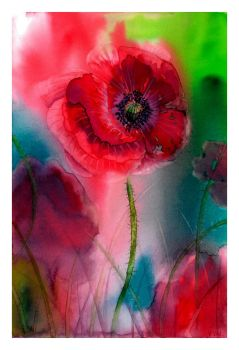 Papaver rhoeas by Verenique