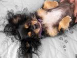 Marleys Tummy Rub by MayEbony