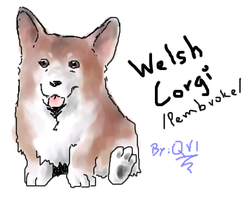 Welsh Corgi on pchat by Qvi