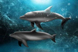Dolphines at Play by lifeformgraphics