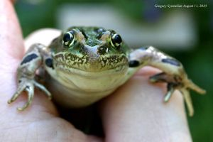 Leopard Frog August 11, 2010 by UffdaGreg