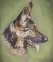 An german shepard painting by sexyfurrie