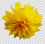 03 heliopsis+transparent by ForestGirlStock