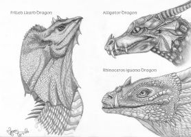 Dragon head studies by LarimarDragon