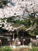 Kyoto Imperial Palace Park by Valka