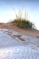 Frost on dune by eswendel