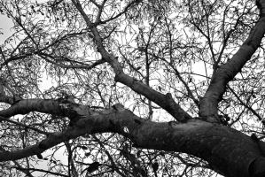BEneath The Branches by rocker409