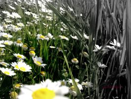 spring color effect by goddessillyria
