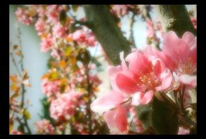 The Darling Buds of May by Forestina-Fotos