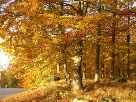 Forest In Gold by CAStock