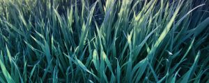 simply_grass_wo frames by idmb