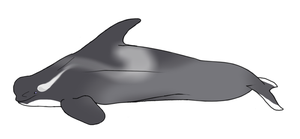 Wraith Whale Adopt: NarniaOrca by WeisseEdelweiss