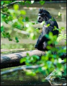 Contemplating Monkey by dmatsui
