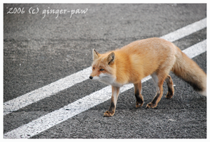Road Crossing by ginger-paw