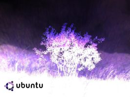 Purple Ubuntu by 24Scorpions