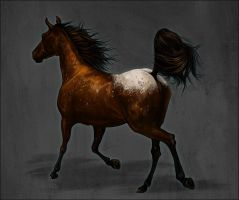 Appaloosa mare by Elsouille