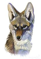 Yote by CoyoteMange