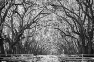 Wormsloe Plantation 3 by rctfan2
