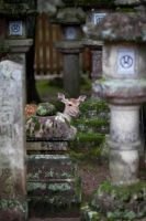 Encounter in Nara by Quit007