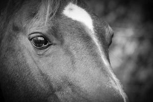 The Reflection in his eye by Horse-lover3708