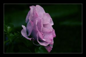 The fragrance remains by SpringlighT