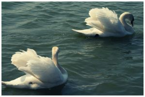white things in the lake by Lyvi